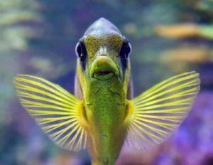 Imágenes de peces exóticos