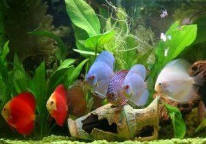 peces discotecas acuarios