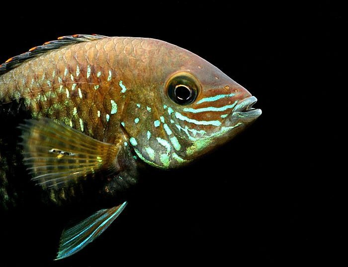 imágenes del pez terror verde