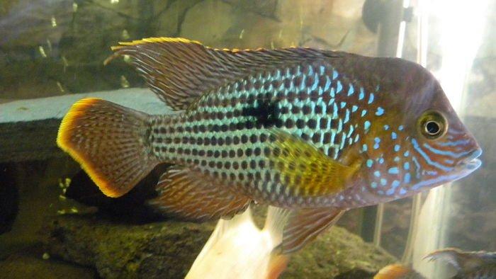 pez terror verde fotos