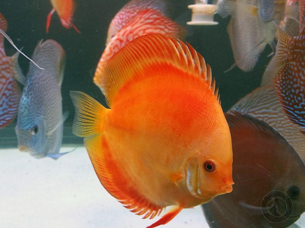 Tipos de peces Exóticos