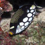 las mejores fotos del pez ballesta