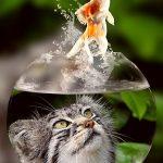 imagenes de peces goldfish
