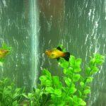 peces platys veliferos