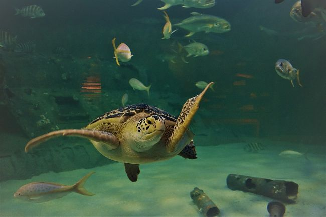 temperatura para acuario de tortugas, tipos de tortugas para acuario, tipos de tortugas para acuarios