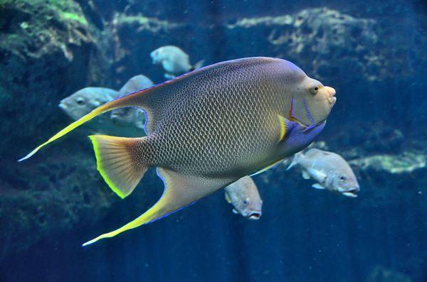 peces de agua salada fotos, peces de agua salada y sus nombres, peces ornamentales de agua salada, peces raros de agua salada