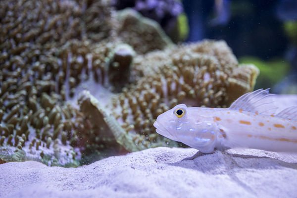 acuario con peces de agua salada, acuario para peces de agua salada, carnada para peces de agua salada, carnada para pez de agua salada,