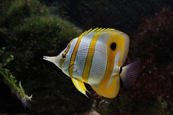como mantener vivos peces de agua salada, como respiran los peces de agua salada, como tener peces de agua salada en casa, cual es el pez de agua salada