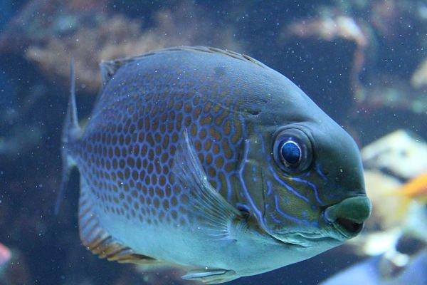cuantas especies de peces de agua salada hay, donde conseguir peces de agua salada, donde consigo peces de agua salada, donde viven los peces de agua salada